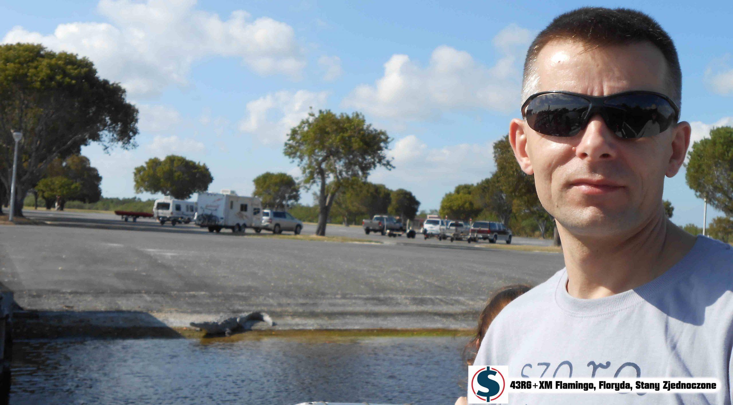Czym jest strategia krokodyla? Krokodyl wygrzewający się na slipie obok parkingu Flamingo, Floryda, USA